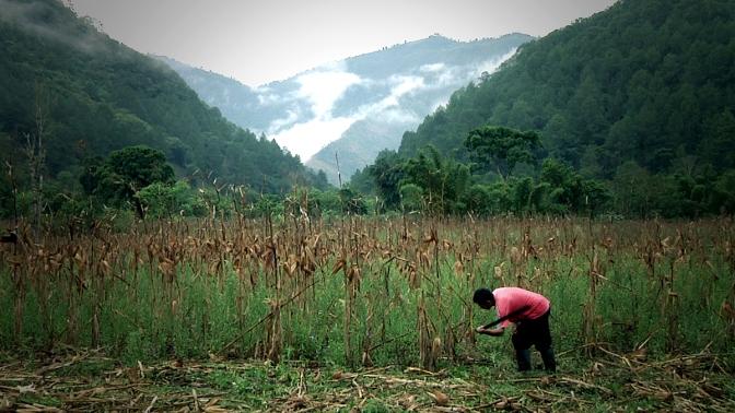 Tierra del maíz